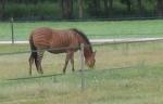 07-07-2008 10-51-51_0008b.jpg